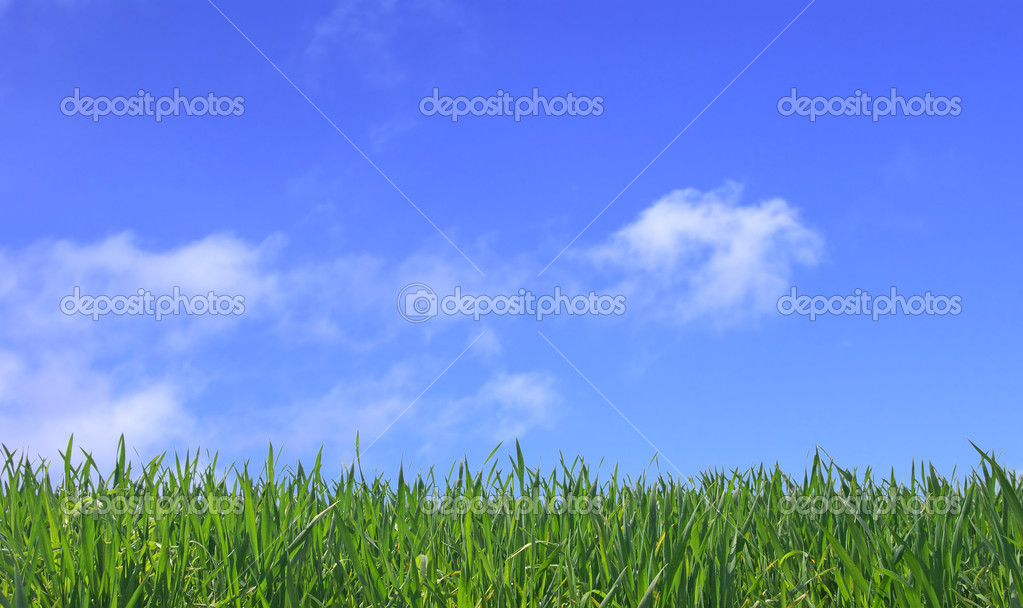 Green grass and blue sky with clouds                     Stock Photo #1617314