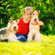 Girl and two fox terriers - Stock Photo