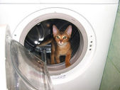 Cat in the washingmachine — Stock Photo
