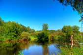 Small woody river — Stock Photo