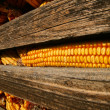 Corn Cob — Stock Photo #1633845