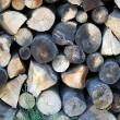 Logs — Stock Photo #1634211