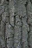 Wood Cortex — Stock Photo