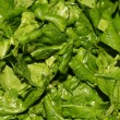 Stock Photo: Spinach