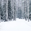 Beautiful winter forest landscape - Stock Photo