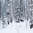 Beautiful winter forest landscape — Stock Photo #1795614