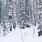 Beautiful winter forest landscape — Stock Photo