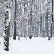 Beautiful winter forest landscape — Stock Photo #1795649