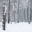 Beautiful winter forest landscape — Stock fotografie