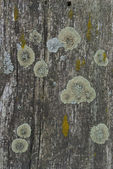 Set Of Lichens — Stock Photo