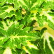 Green plant leaf background — Stock Photo #1882570