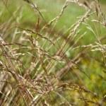 Grass — Stock Photo #2150702