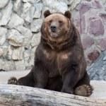 Bear — Stock Photo #2150808