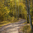 Road to autumn park — Foto Stock