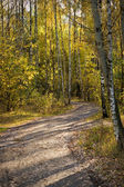 Road to autumn park — Stock Photo