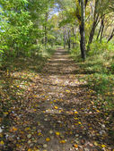 Autumn footpath — Foto Stock