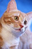 Lunar cat — Stock Photo