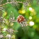 Fur-tree — Stock Photo