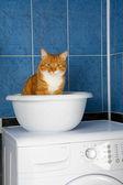 Kotek w łazience — Zdjęcie stockowe