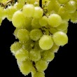 Grapes in water on black — Stock Photo