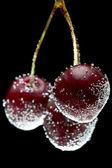 Cherries in water — Stock Photo