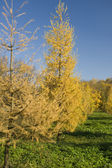 Päls träd i parken — Stockfoto