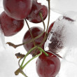 图库照片: Cherry in ice