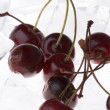 Cherry in ice closeup — Stock Photo