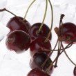 Stock Photo: Cherry in ice closeup