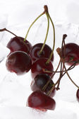 Cherry in ice closeup — Stockfoto
