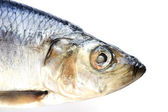 Herring on white — Stock Photo