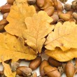 Stock Photo: Acorns and leaves