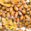 Leaves with acorns — Stock Photo #1732570