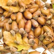 Stock Photo: Leaves with acorns
