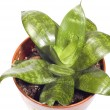 Indoor plants — Stock Photo #1776033