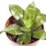 Indoor plants — Stock Photo