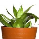 Window plants — Stock Photo