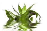 Water plants — Stock Photo