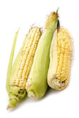 Corn in cob close up — Stock Photo