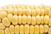 Corn in cob macro — Stock Photo