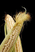 Corn on black — Stock Photo