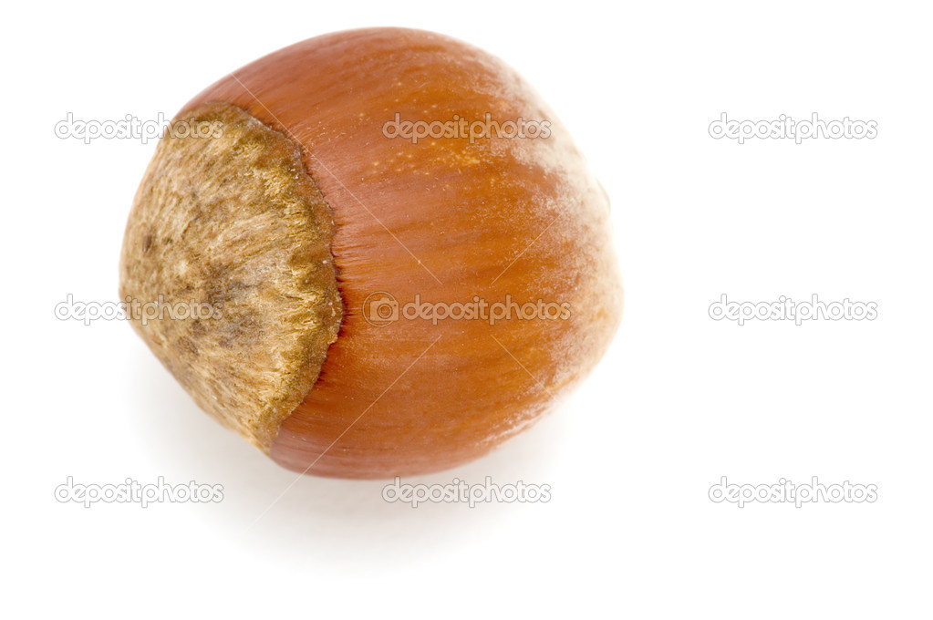 Object on white - food hazel nut — Stock Photo #1808479