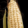Stock Photo: Raw corn macro