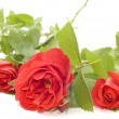 Red rose — Stock Photo #1821897