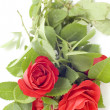 Red rose — Stock Photo #1821903
