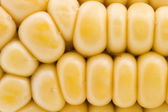 Raw corn macro — Stock Photo