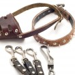 Accessories for dog — Stock fotografie #1840412