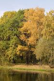 Automne dans le parc avec lac — Photo