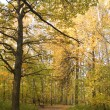 Fall in park — Stock Photo #1863251