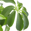 Plant on white — Stock Photo